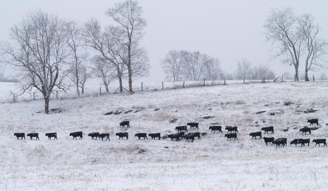 Walkup Farm Beef
